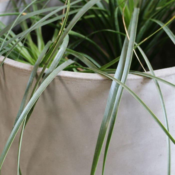 brooklyn concrete planter round closeup view